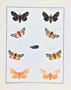 AA.VV. - European butterflies, engraved and colored. ENGRAMELLE – ERNST. Papillons d'Europe.