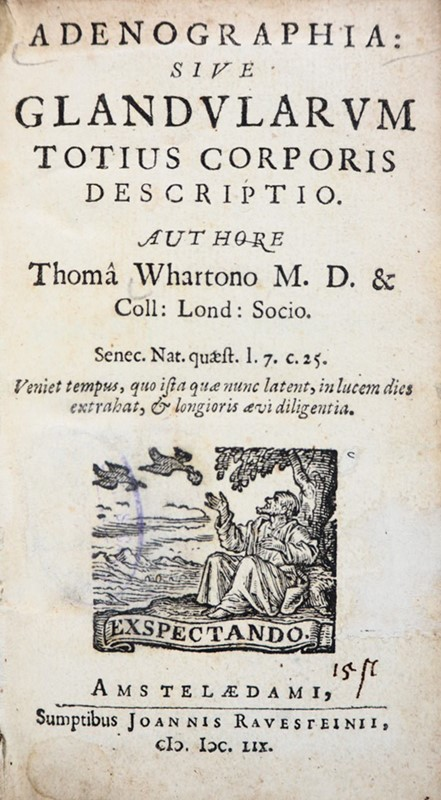 Thomas Wharton : Anatomy. WHARTON. Adenographia: sive Glandularum totius Corporis Descriptio.  - Anatomy - Auction FINE AND RARE BOOKS - Bado e Mart Auctions