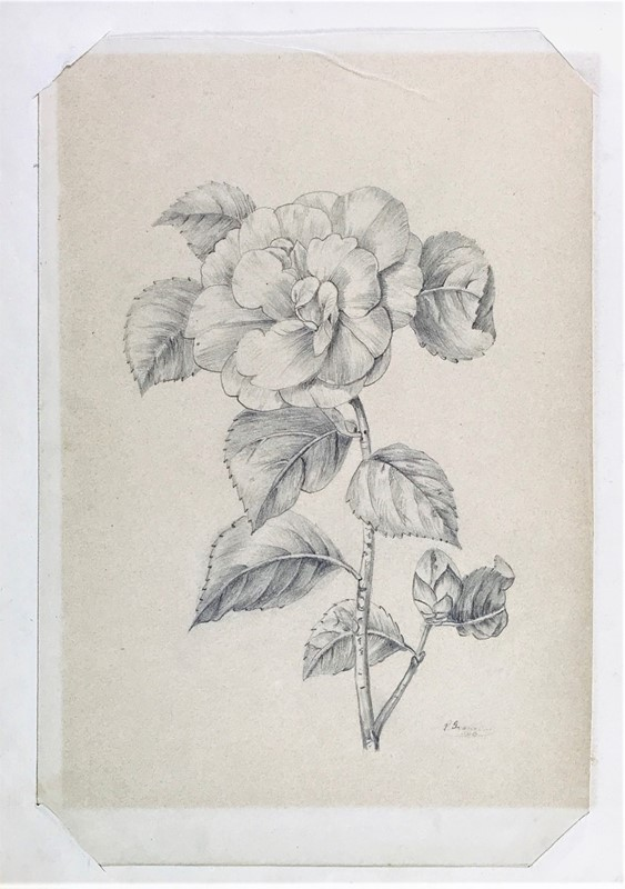 GRANCINI. Camelia.  - Auction FROM VENICE TO ORIENT ANTIQUE ART WORKS. - Bado e Mart Auctions