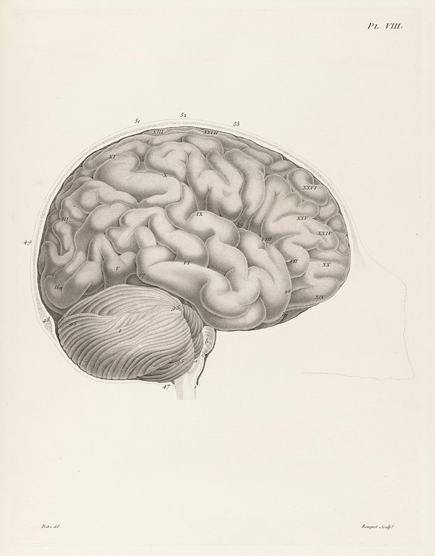 Neurology. GALL. Anatomie et physiologie du systême  - Asta A Collector's Library Part II - Bado e Mart Auctions