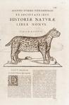 New Word Natural History, Mineralogy. NIEREMBERG.